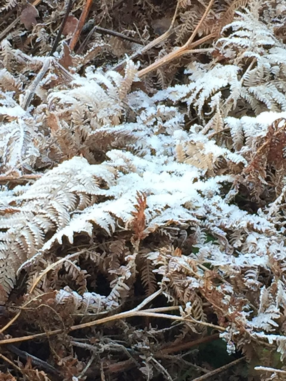 winter, nature, cold temperature, snow, day, outdoors, no people, field, frozen, plant, growth, beauty in nature, close-up, fragility