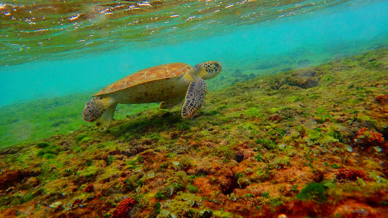 not often you can get a closeup like this Animal Themes Animal Wildlife Animals In The Wild Beauty In Nature Day Nature No People One Animal Reptile Sea Sea Life Sea Turtle Swimming UnderSea Underwater Water