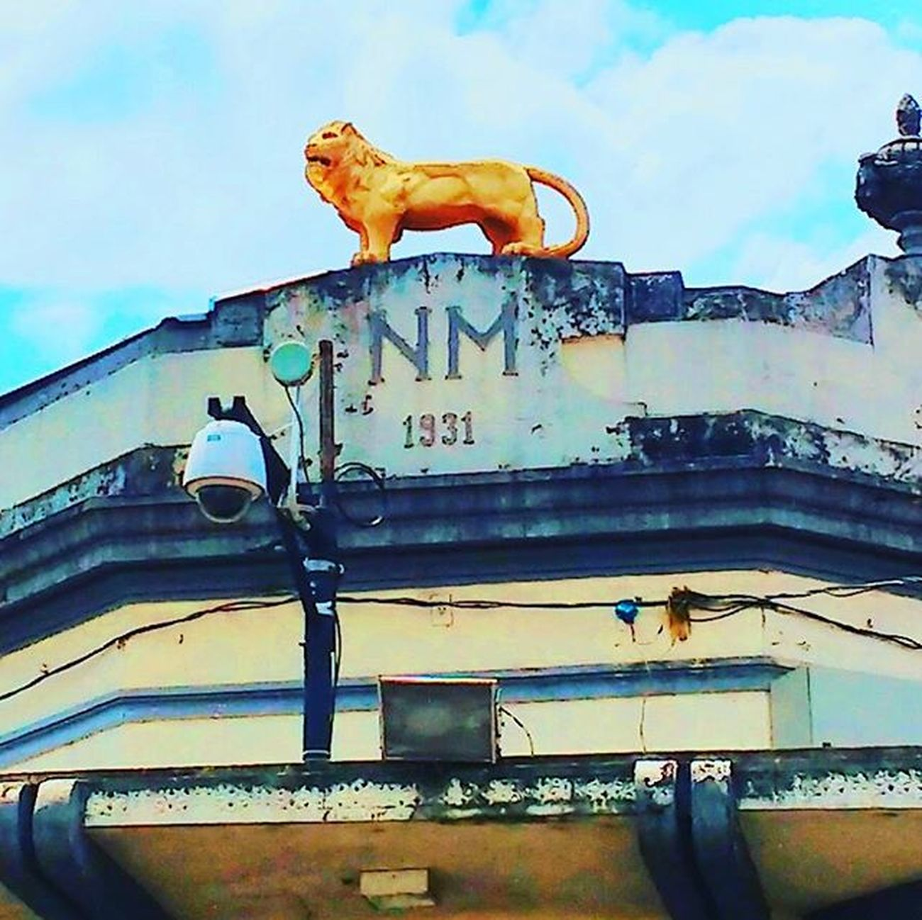 O Leão Observador Sabara