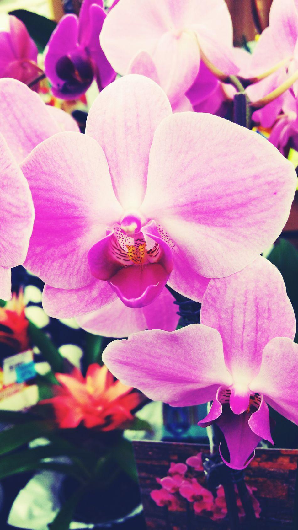 Flowerporn Beautiful Pretty♡ Purple Flower