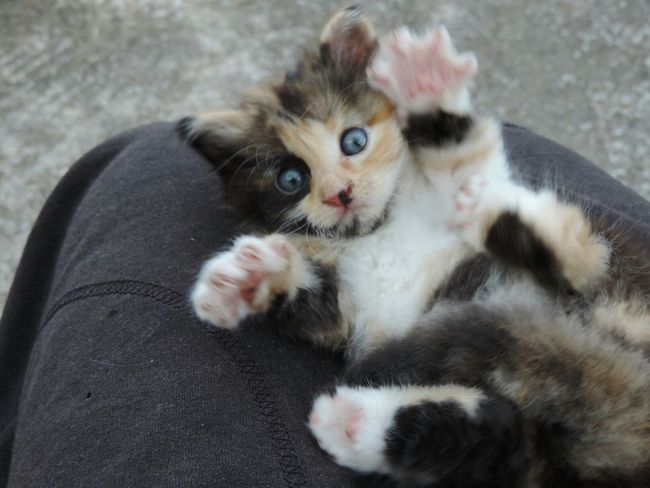 Goodmorning People Cat Cute Puppy Nature Animals Cat Lovers..
