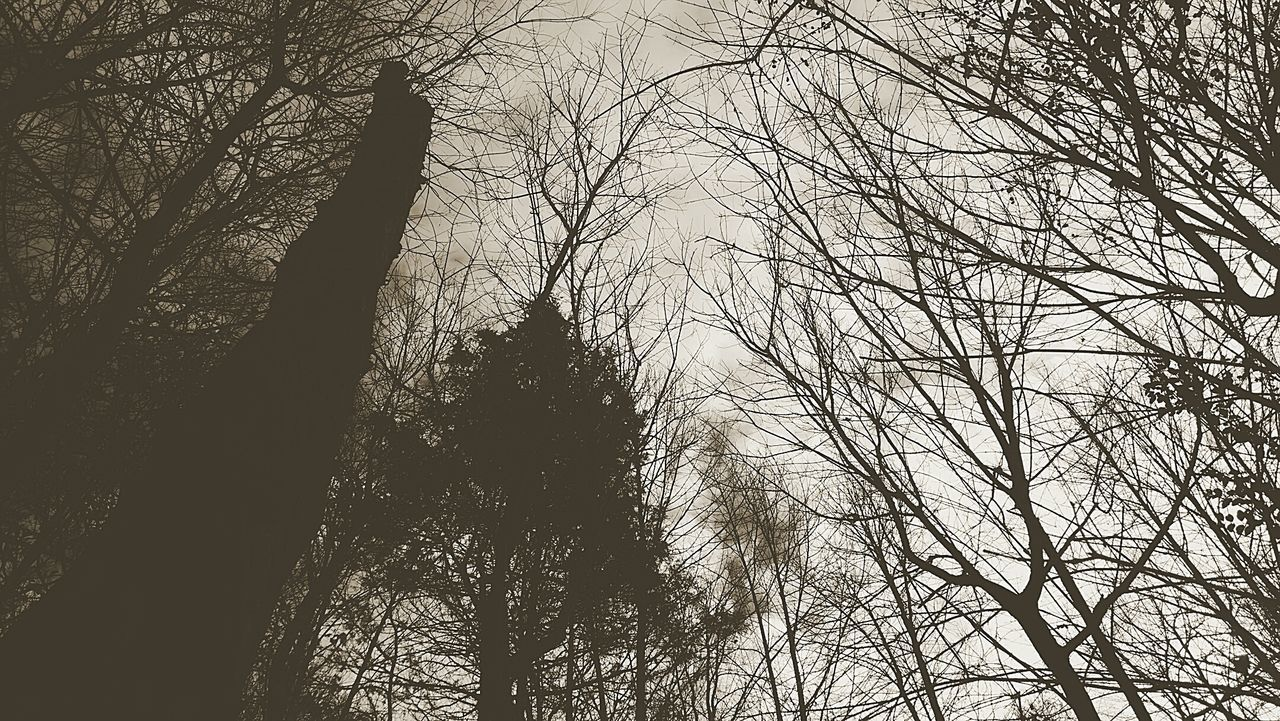 Tree Nature Branch No People Growth Outdoors Beauty In Nature Sky Silouette & Sky Silhouettes Trees Trees And Sky Woods EyeEm Nature Lover Woods And Color Backgrounds Sepia Tone Sepia_collection Skyward Reaching For The Sky EyeEmBestEdits EyeEm Masterclass