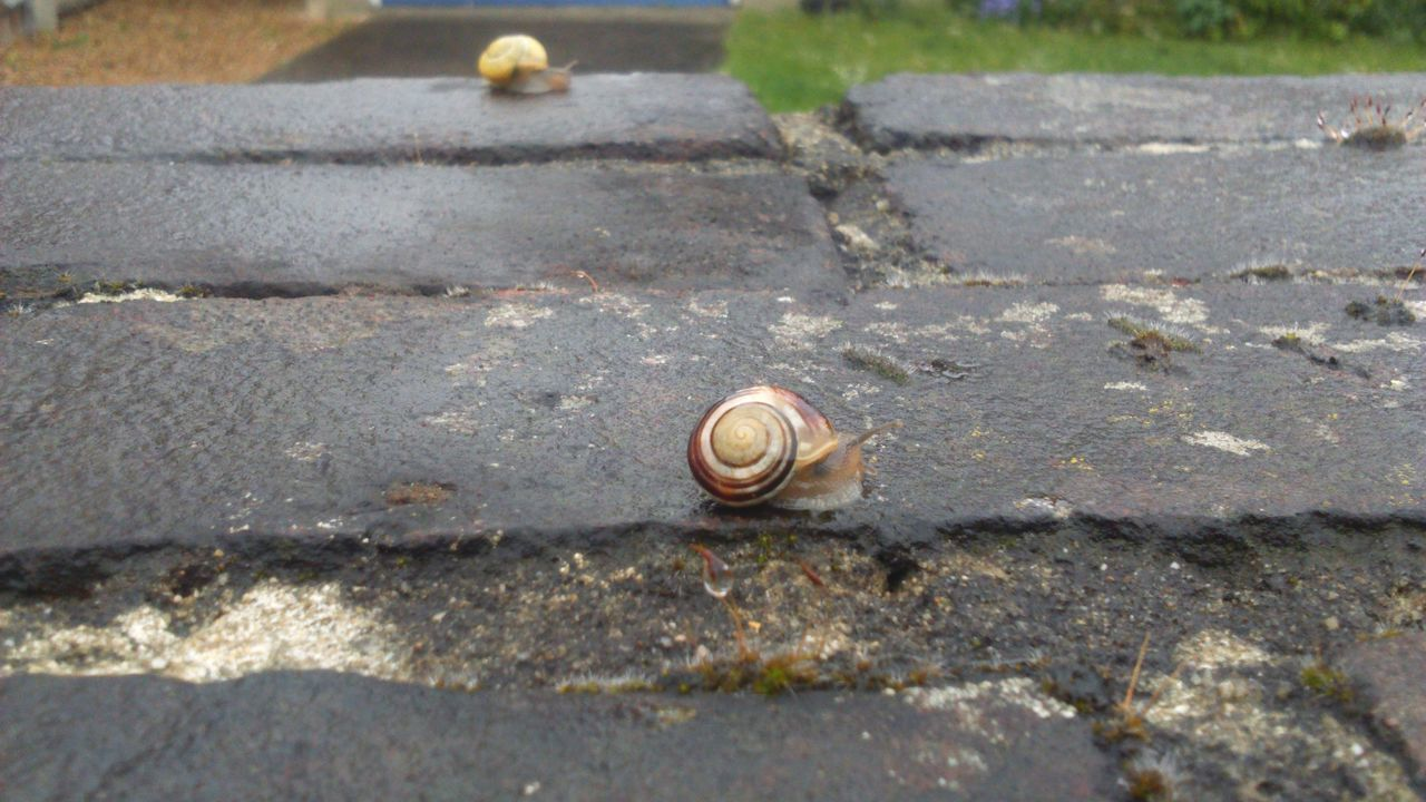 Snails Concrete Shell Snail Shell Swirly Slimy Snails Slimy Nature On Your Doorstep Nature Photography Nature_collection Nature Snail Collection Snail Rain Rainy Wet Rainy Day Wet Day Wall Concrete Wall Snail On The Wall Front And Back Near And Far Gastropoda Mollusca