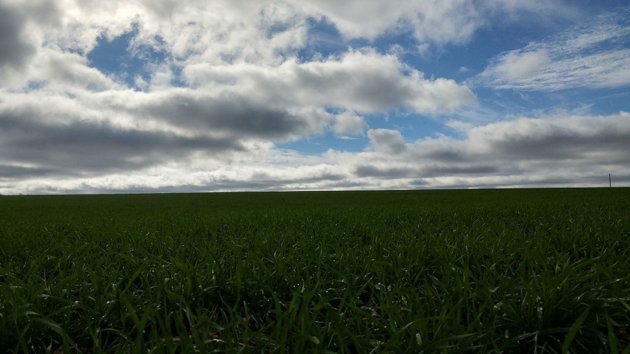 field, growth, nature, agriculture, sky, landscape, grass, no people, tranquility, cloud - sky, beauty in nature, outdoors, day