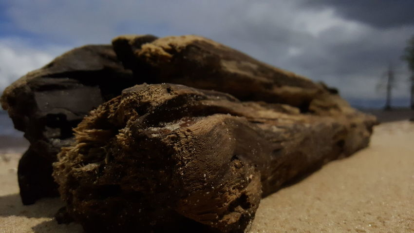 Driftwood. PhotographybyTripp Smartphone Photography Samsung Galaxy Note 5 Camera360Ultimate Pixlr Beastgrip Pro Unedited Photo No Edit/no Filter Unique Style Creative Photography Creative Shots Beachphotography Driftwood