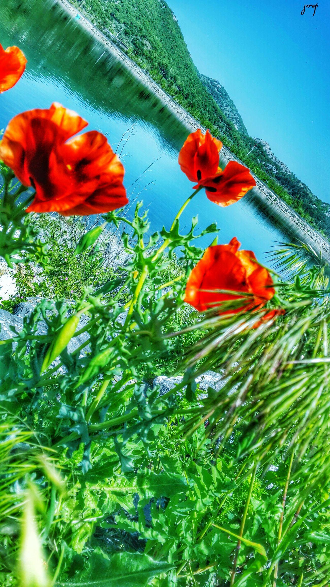 🌷 Flowers 🌹 ı Love Nature!