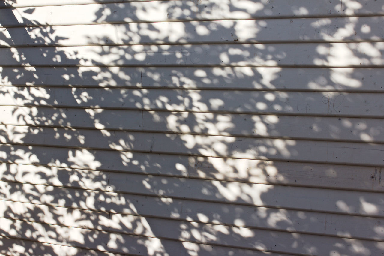 Backgrounds Close-up Day Full Frame LINE Lines Lines And Shapes No People Outdoors Pattern Patterns Everywhere Patterns In Nature Shadow Shadows & Lights Tree Shadow Wall White & Grey White Wall