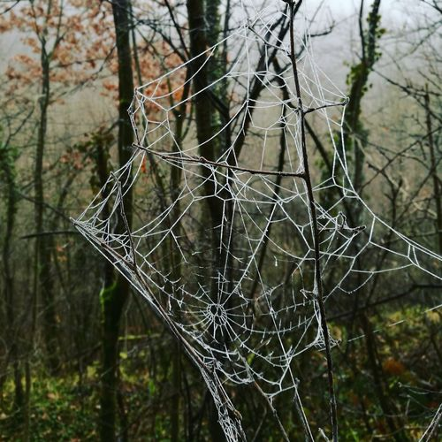 Spider Nature Ice Spider Web