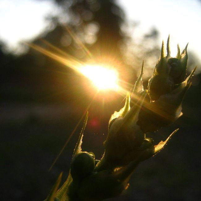 [ pagi ] Sunrise Koolplant Instagram Waykanan lampung indonesia instanusantara instanusantaranature nature instagood instaparadise photooftheday picoftheday webstagram statigram