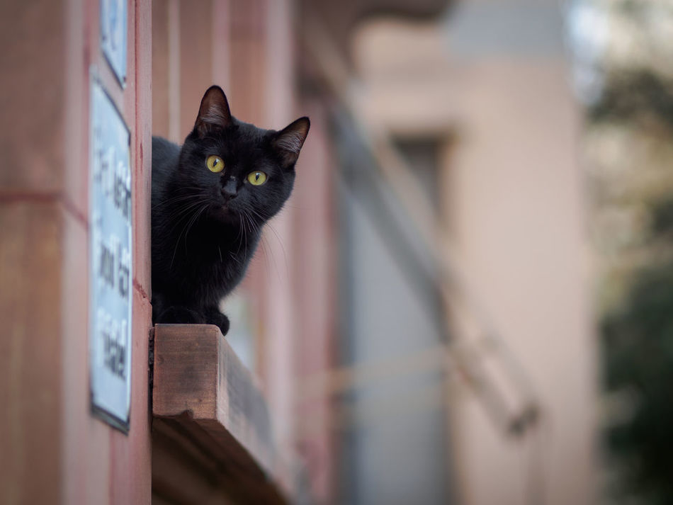 Bockenheim Cat Animal Themes Black Building Exterior Cat Day Domestic Animals Domestic Cat Feline Focus On Foreground Looking At Camera Mammal No People One Animal Outdoors Pets Portrait Whisker Yellow Yellow Eyes