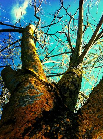 Hugging A Tree Branches EyeEm Nature Lover OurColorfulPlanet