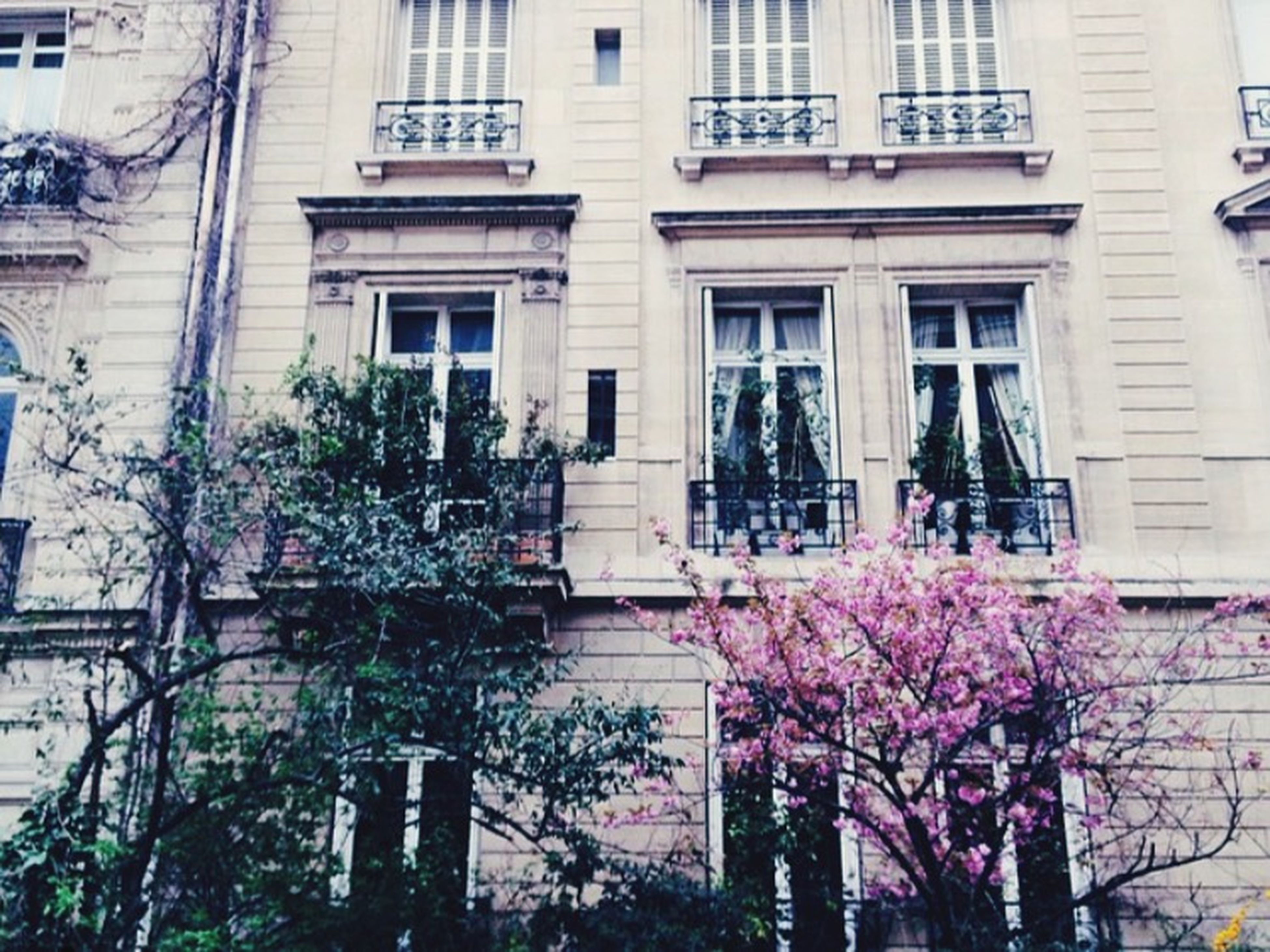 building exterior, architecture, built structure, window, flower, building, residential building, growth, tree, low angle view, residential structure, city, balcony, house, plant, day, branch, outdoors, potted plant, no people