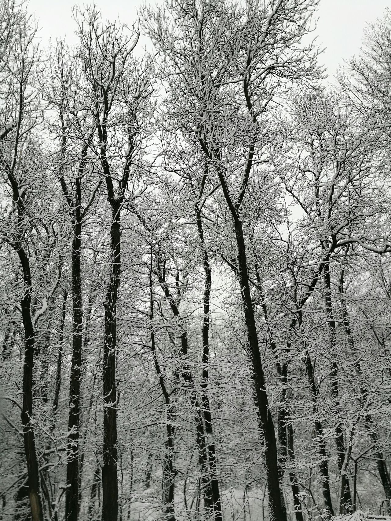 Tree Nature Sky No People Beauty In Nature Close-up Day Outdoors Low Angle View Growth Transportation Snow Snowy Trees