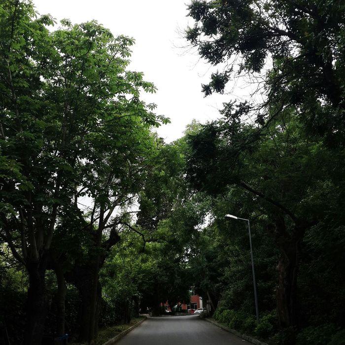Road Trees School Vscocam Amazing Beautiful