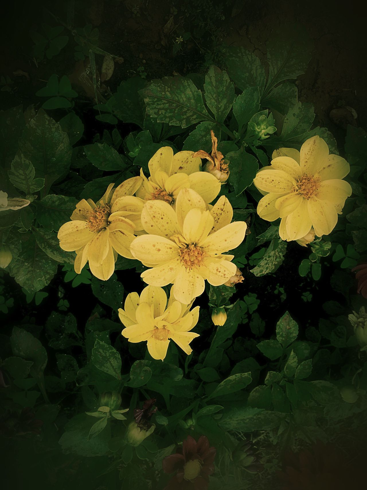 IPhone IPhoneography Flower Fragility Beauty In Nature Petal Freshness Nature Flower Head Leaf Growth Yellow Plant Water Blooming Outdoors No People Close-up Day