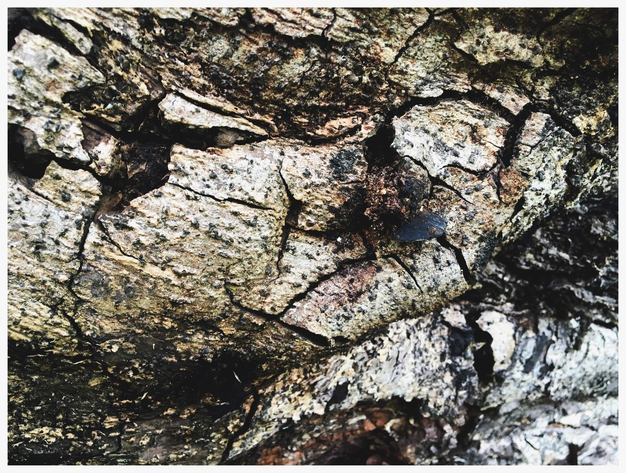textured, tree trunk, rough, bark, full frame, backgrounds, tree, close-up, day, no people, outdoors, nature