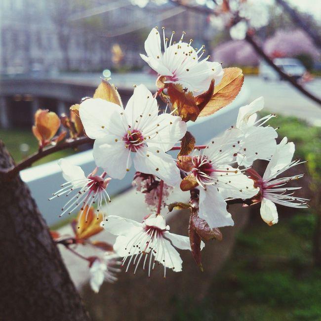 Spring Flower Sun Narime