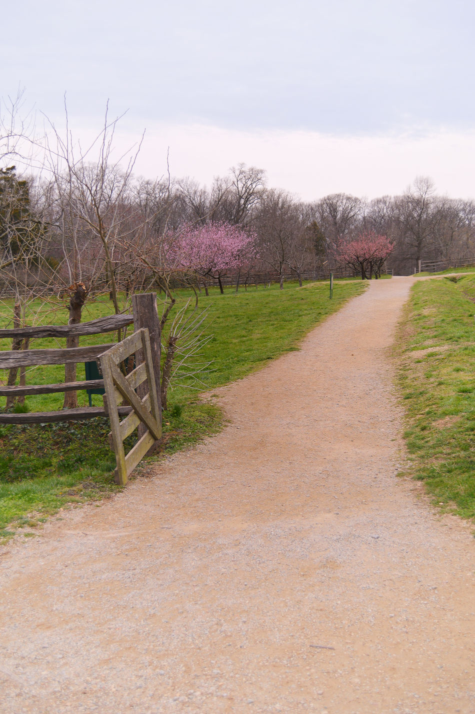 George Washington's Cherry Trees #WashingtonDC Cherry Cherry Blossoms Fences Fields History Millennial Pink Nature No People Paths