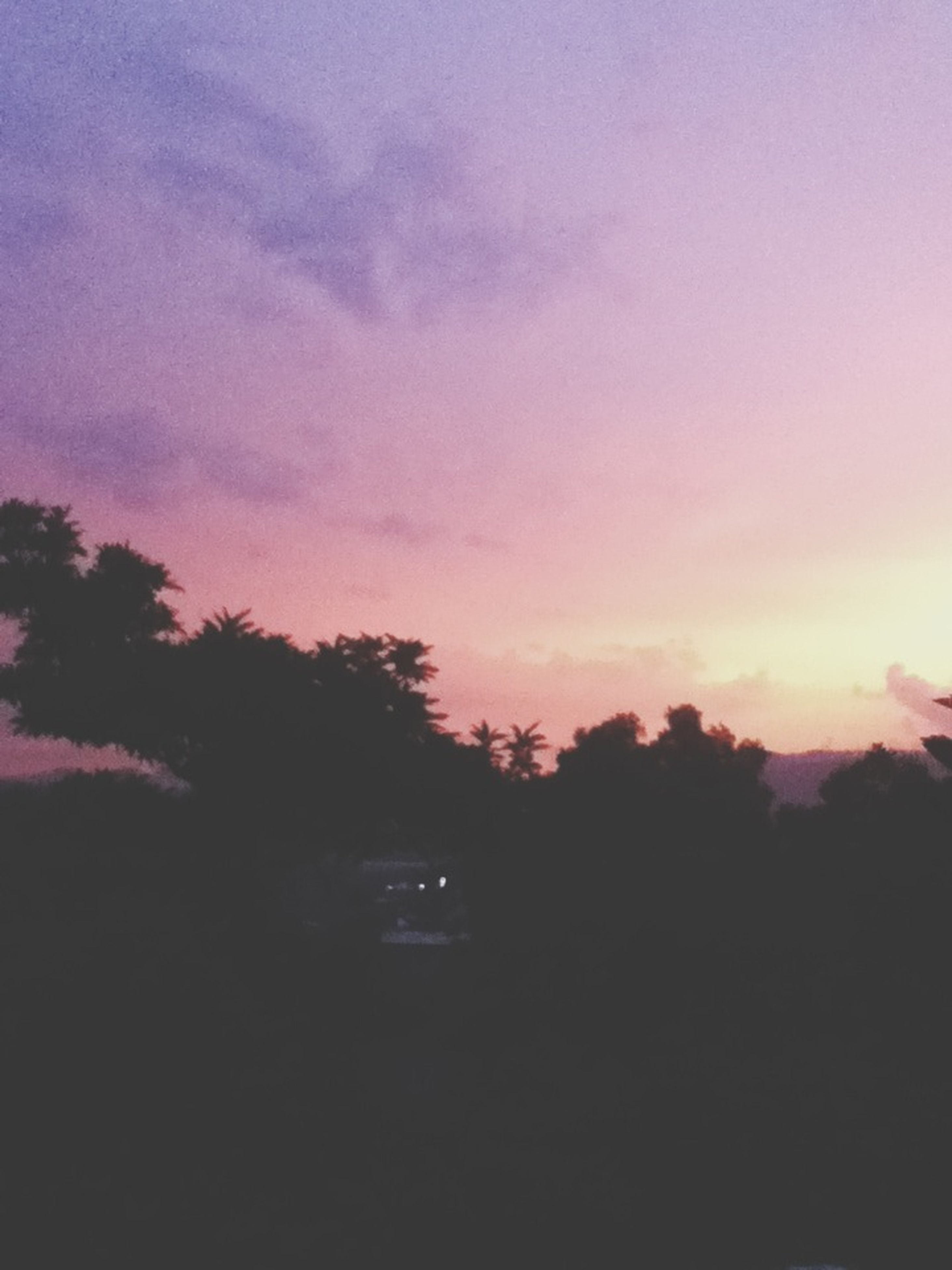 silhouette, sunset, tree, sky, beauty in nature, tranquility, scenics, tranquil scene, nature, orange color, cloud - sky, idyllic, dusk, low angle view, outdoors, dark, growth, no people, landscape, cloud