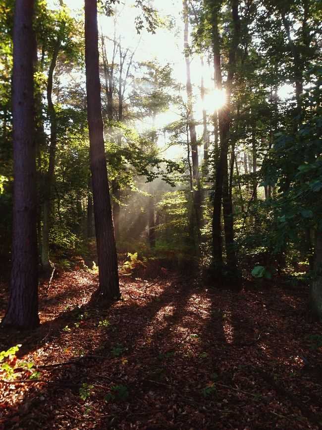 Autumn Colors Beauty In Nature The Morning Light Mist
