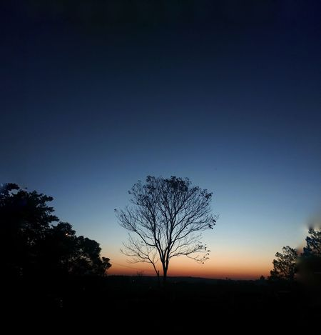 Bare Tree Beauty In Nature Landscape Lone Majestic Nature Outdoors Sky Sunset Tranquility Tree