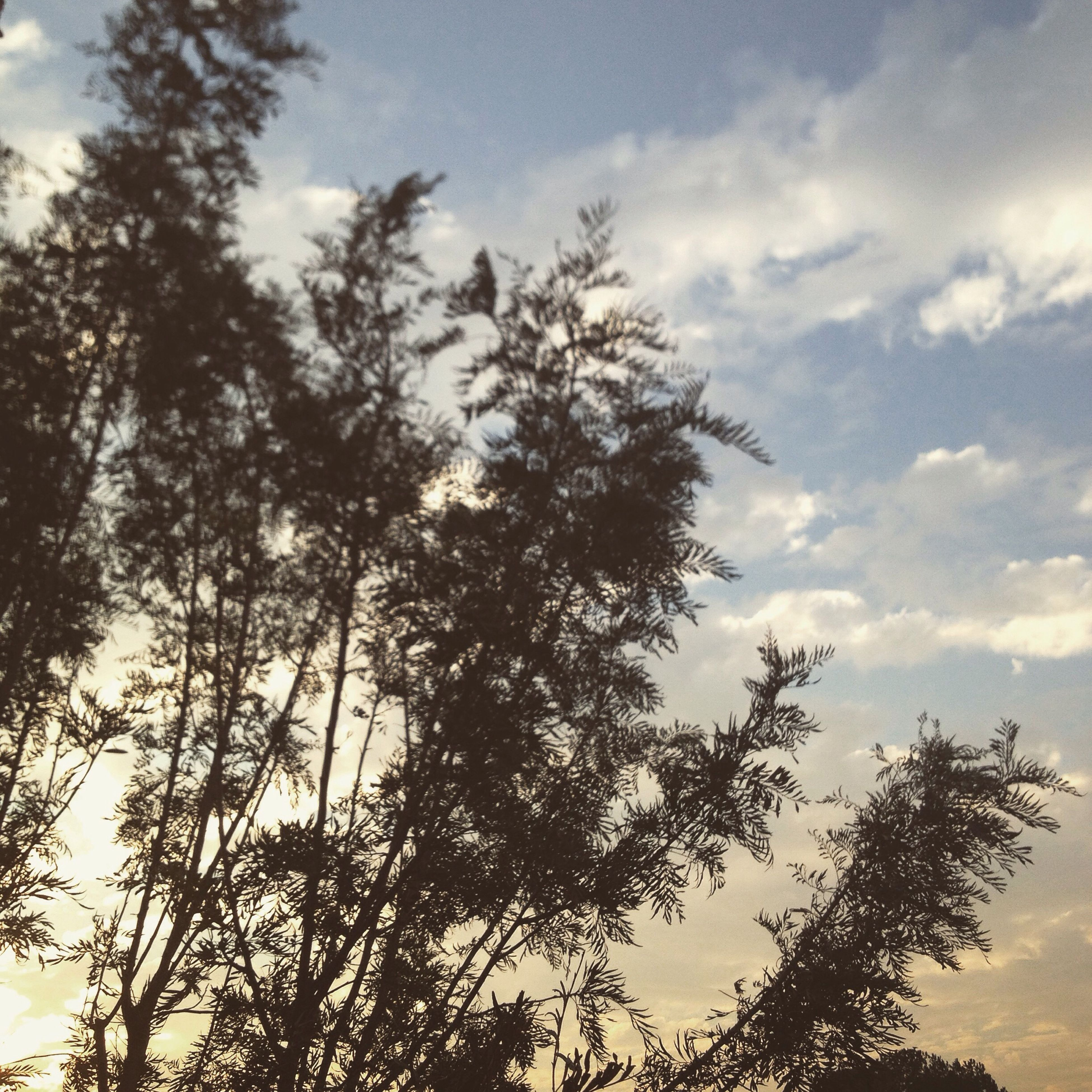 tree, low angle view, sky, silhouette, tranquility, cloud - sky, branch, growth, beauty in nature, nature, tranquil scene, scenics, cloud, cloudy, tree trunk, bare tree, sunset, outdoors, no people, idyllic