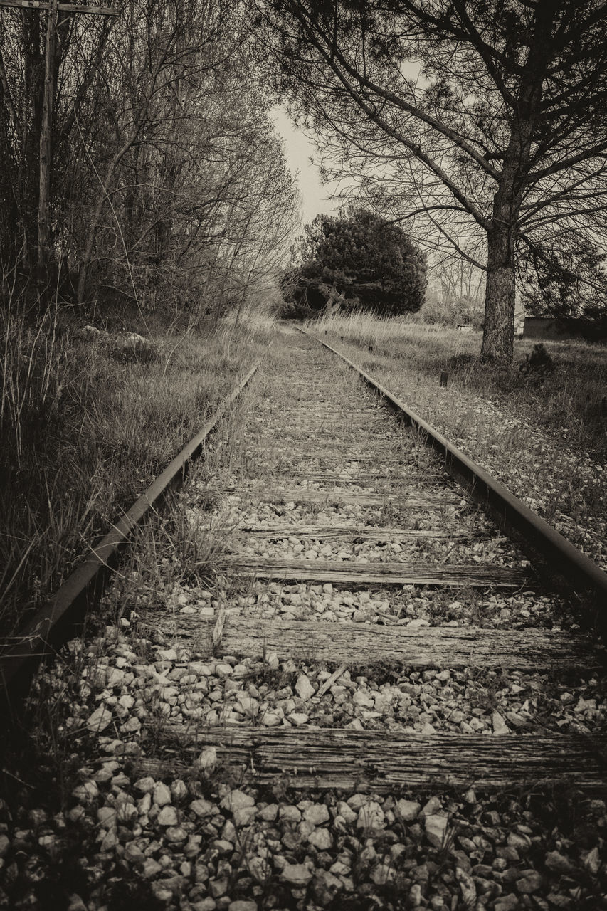 Railroad Track Amidst Bare Trees