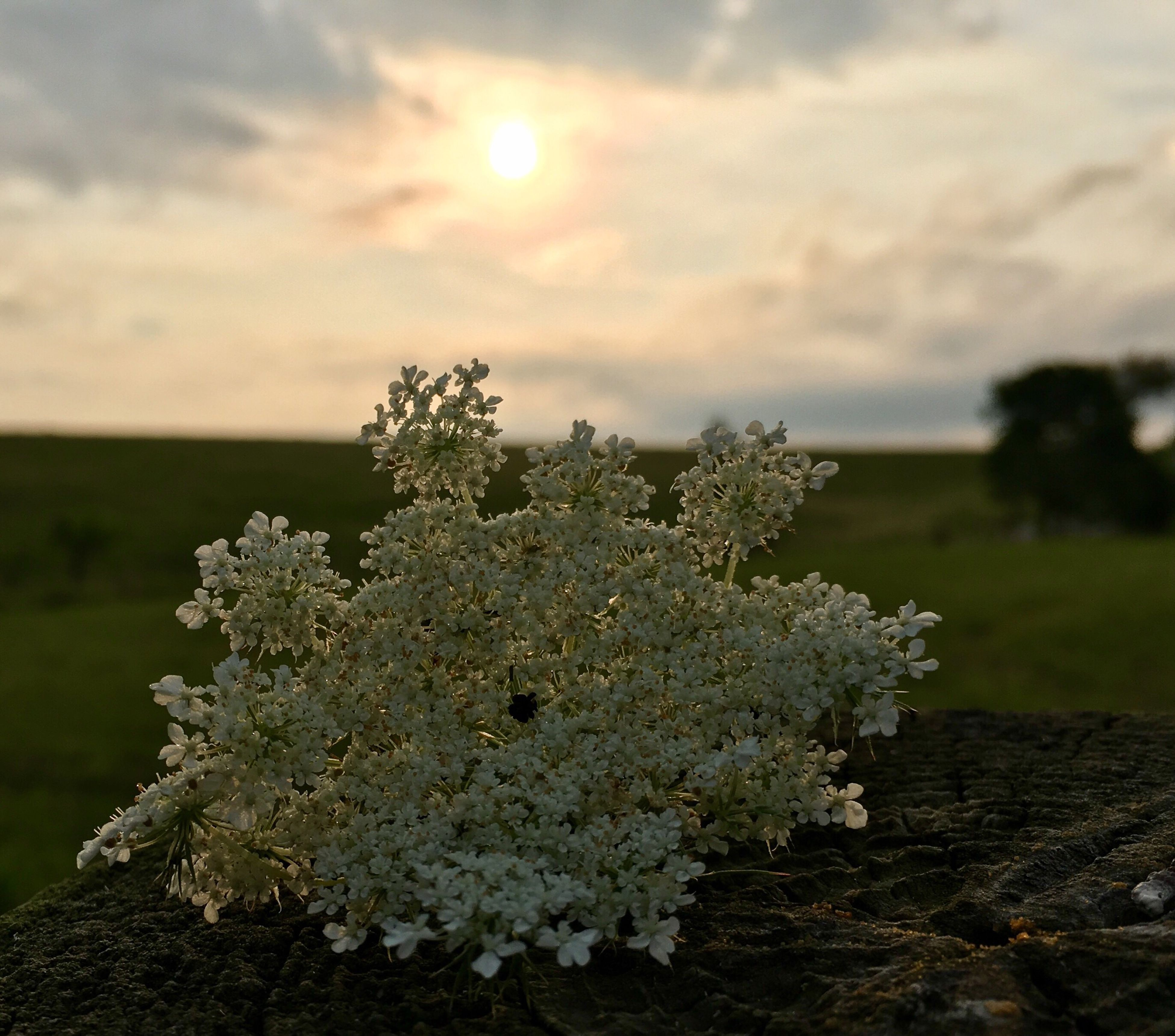 nature, beauty in nature, growth, tranquility, outdoors, no people, plant, scenics, tree, day, sunset, sky, close-up, flower, fragility, freshness
