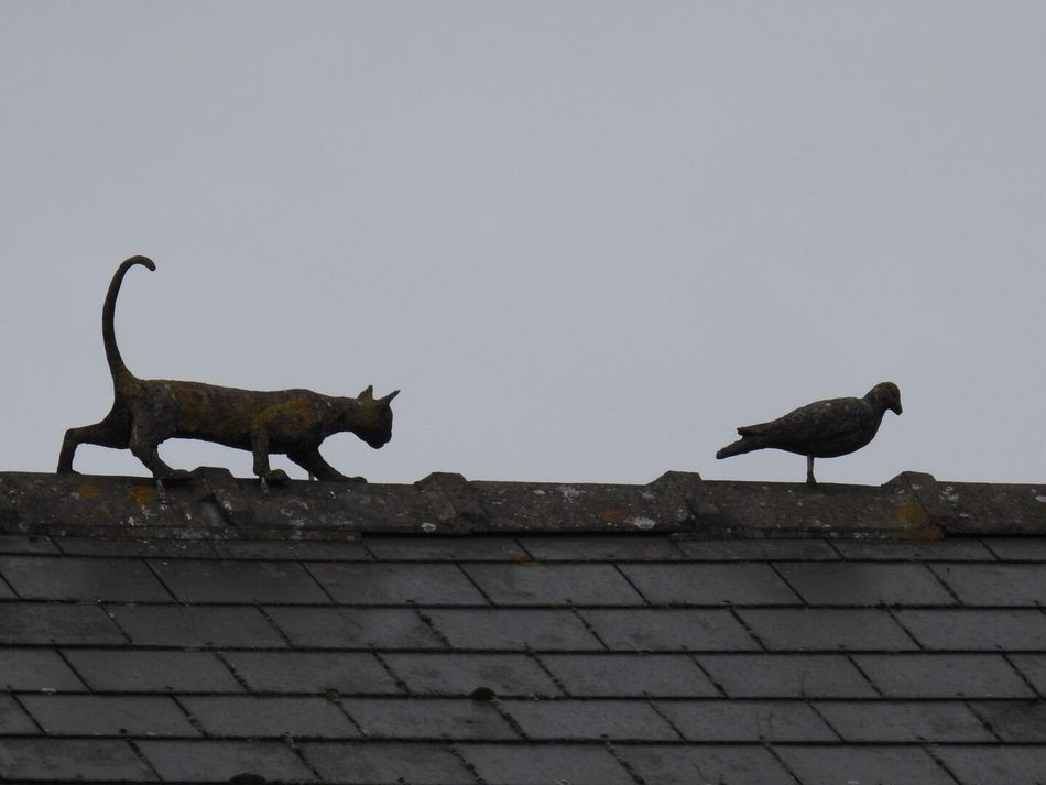 Art Is Everywhere Rooftop No People Built Structure Sculpture Animal Art Outdoors Fun