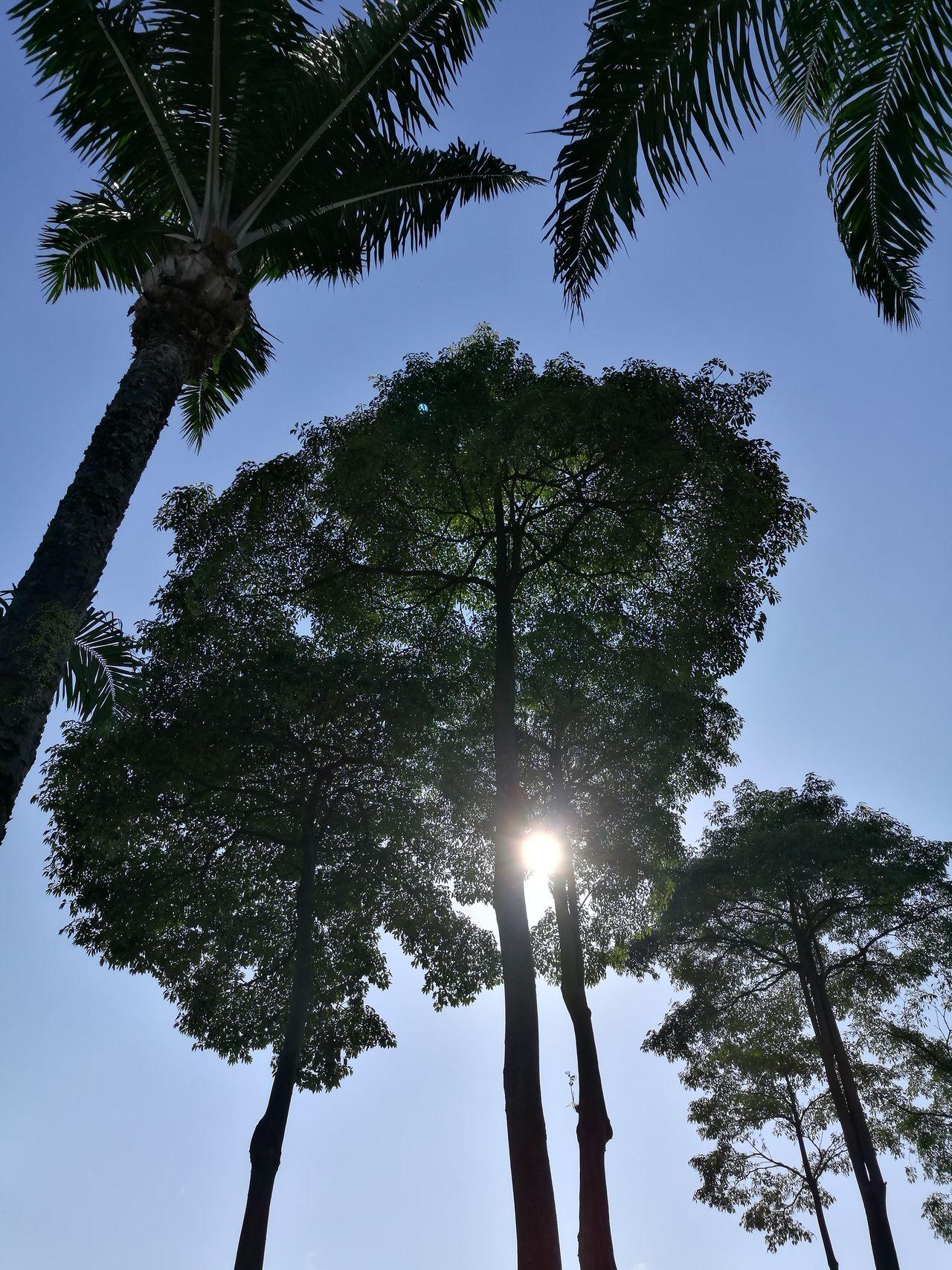 In Shades Sunlight Beaming Through Leaves Walk Under The Sun Johor Bahru
