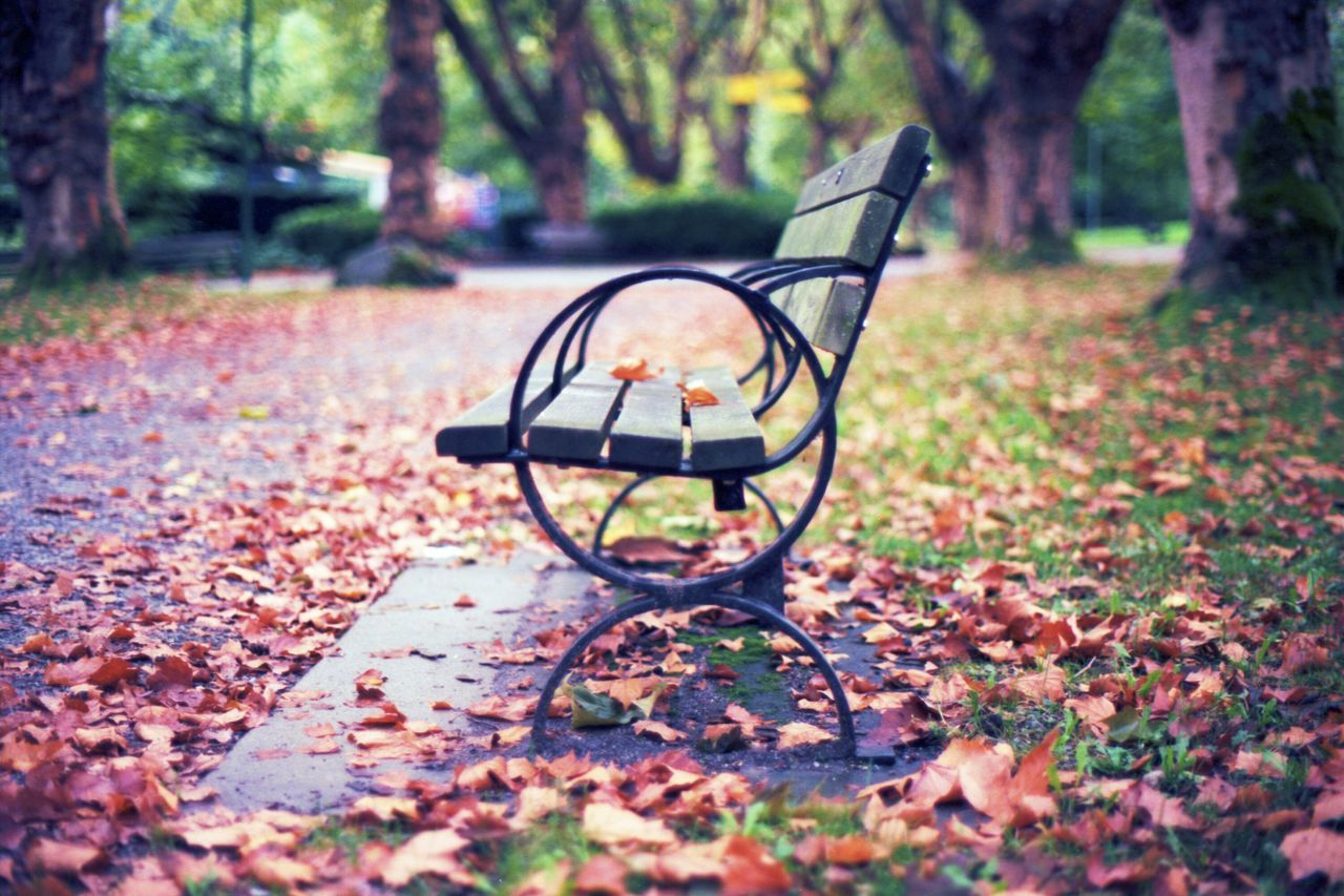 View Of Bench In Park At Autumn