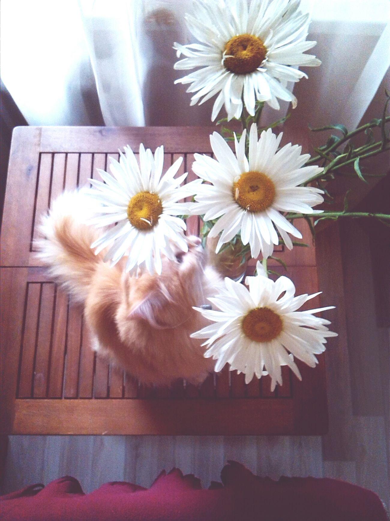 My.cat