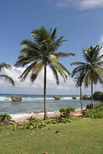 Palm Tree Tree Sea Water Beach Landscape Scenics Tropical Climate Cloud - Sky Horizon Over Water Travel Destinations Water's Edge SandNature No People Day Vacations Sky Tranquility Grass Barbados, Caribbean, cruise Mix Yourself A Good Time Been There.