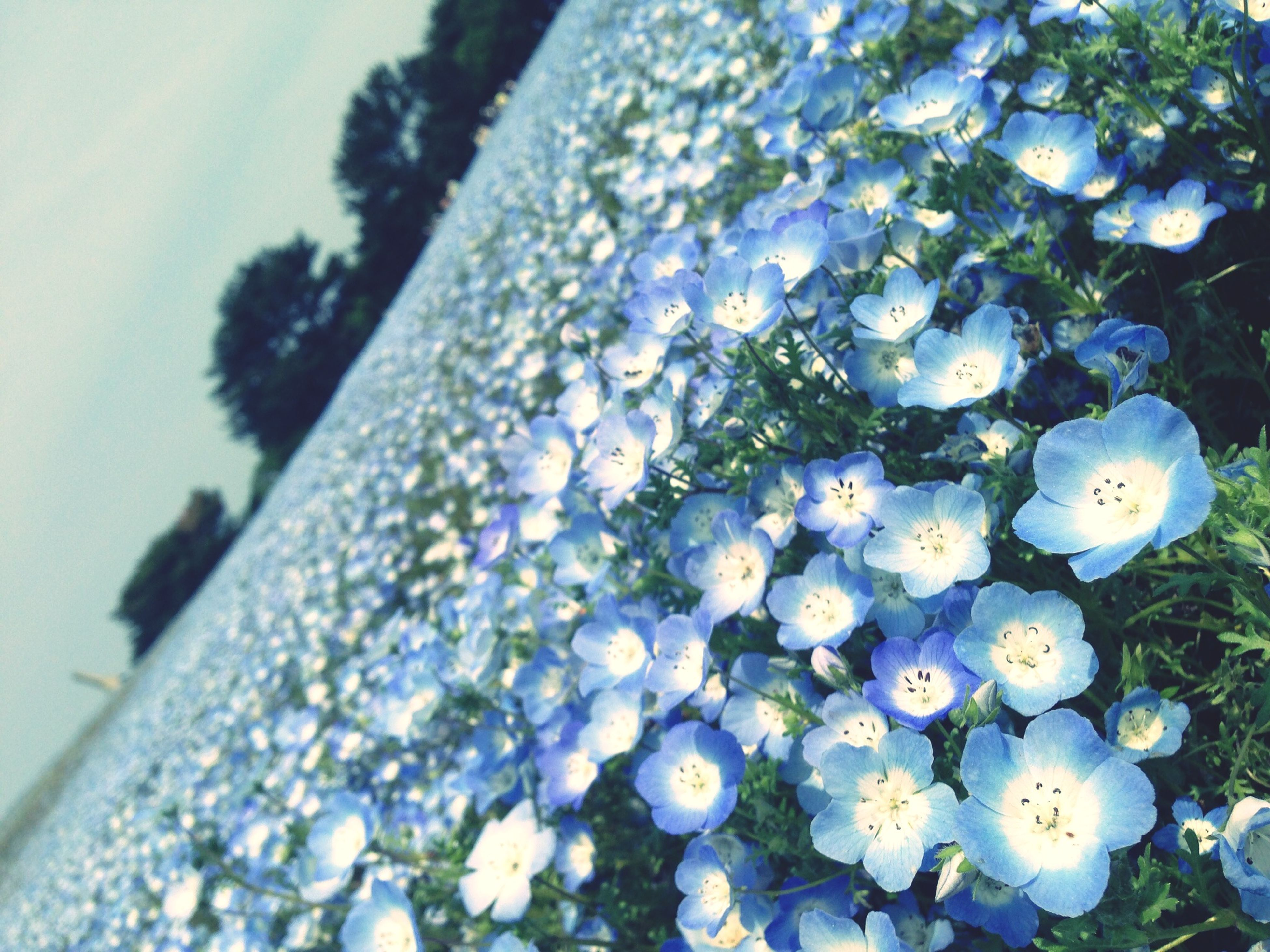 flower, growth, fragility, freshness, white color, beauty in nature, nature, close-up, plant, focus on foreground, blooming, petal, tree, day, in bloom, selective focus, blossom, low angle view, botany, outdoors