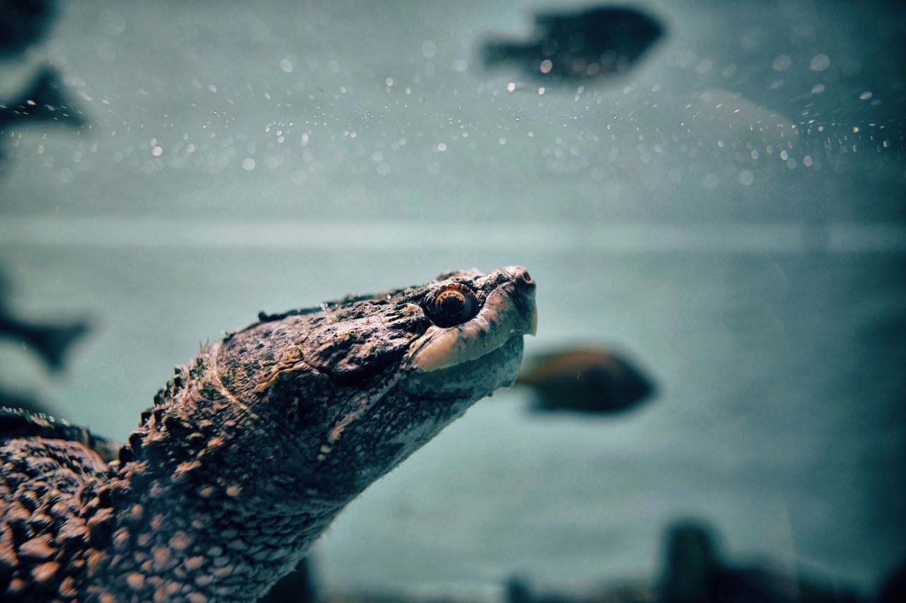 Animal Themes One Animal Animals In The Wild Reptile Water Animal Wildlife Close-up Nature Outdoors Day Sea No People Sea Turtle Sea Life EyeEmNewHere