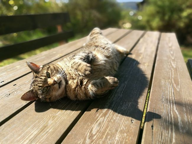 Luckily this great model didn't require a model release. One Animal Animal Themes Wildlife Animals In The Wild Shadow Wood - Material Wooden Sunlight Plank Focus On Foreground Day Floorboard Curiosity Outdoors Whisker No People Norway🇳🇴 Norge Chillaxing Cats Of EyeEm