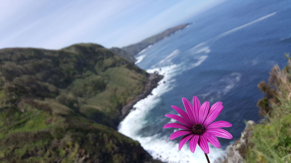 Achadina Achadina, Azores Flower Beauty In Nature Outdoors Sao Miguel- Azores Azores Wandern 🌄 Wandern Am Meer