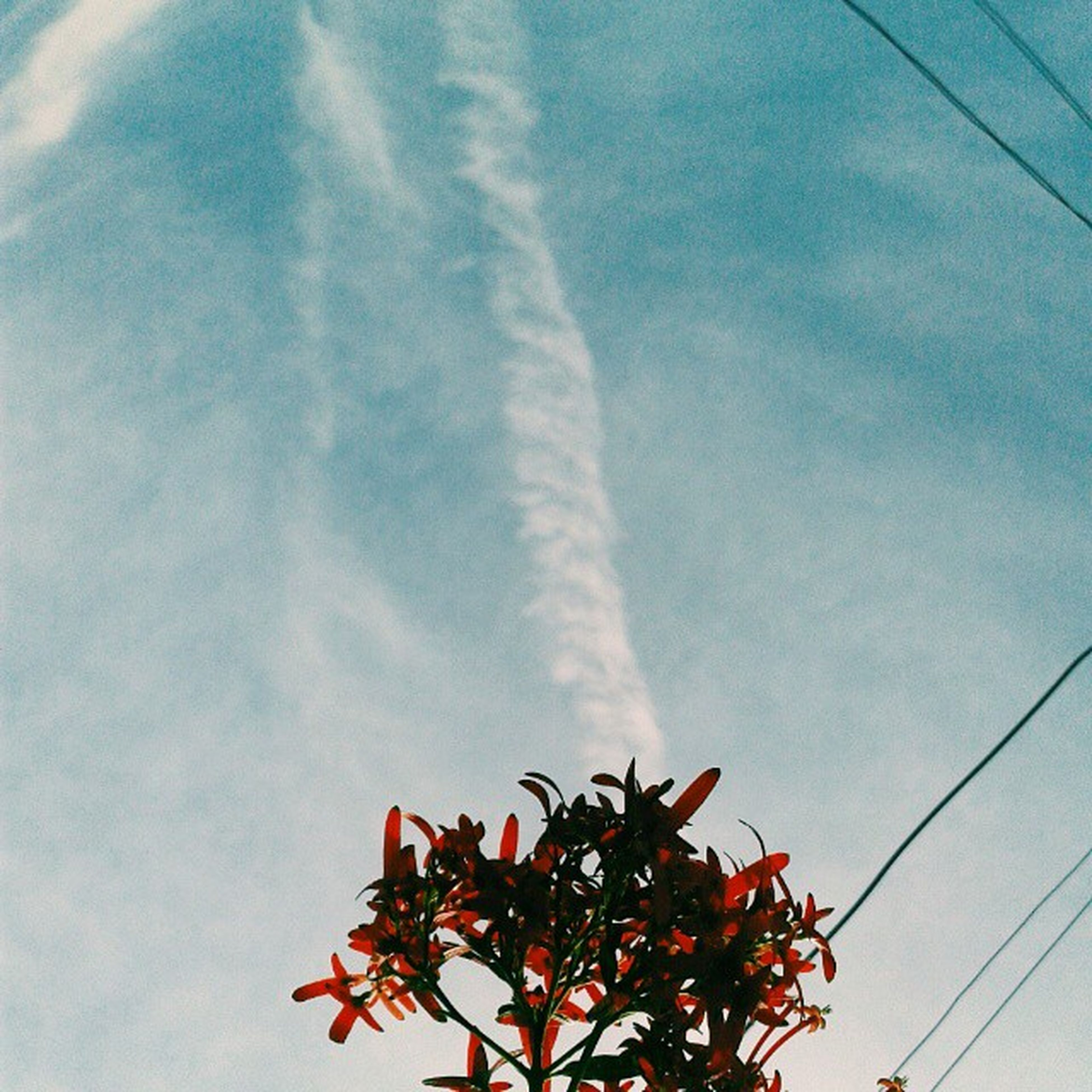 low angle view, sky, growth, cloud - sky, nature, beauty in nature, red, cloud, leaf, plant, day, freshness, outdoors, no people, blue, cloudy, tree, tranquility, flower, close-up