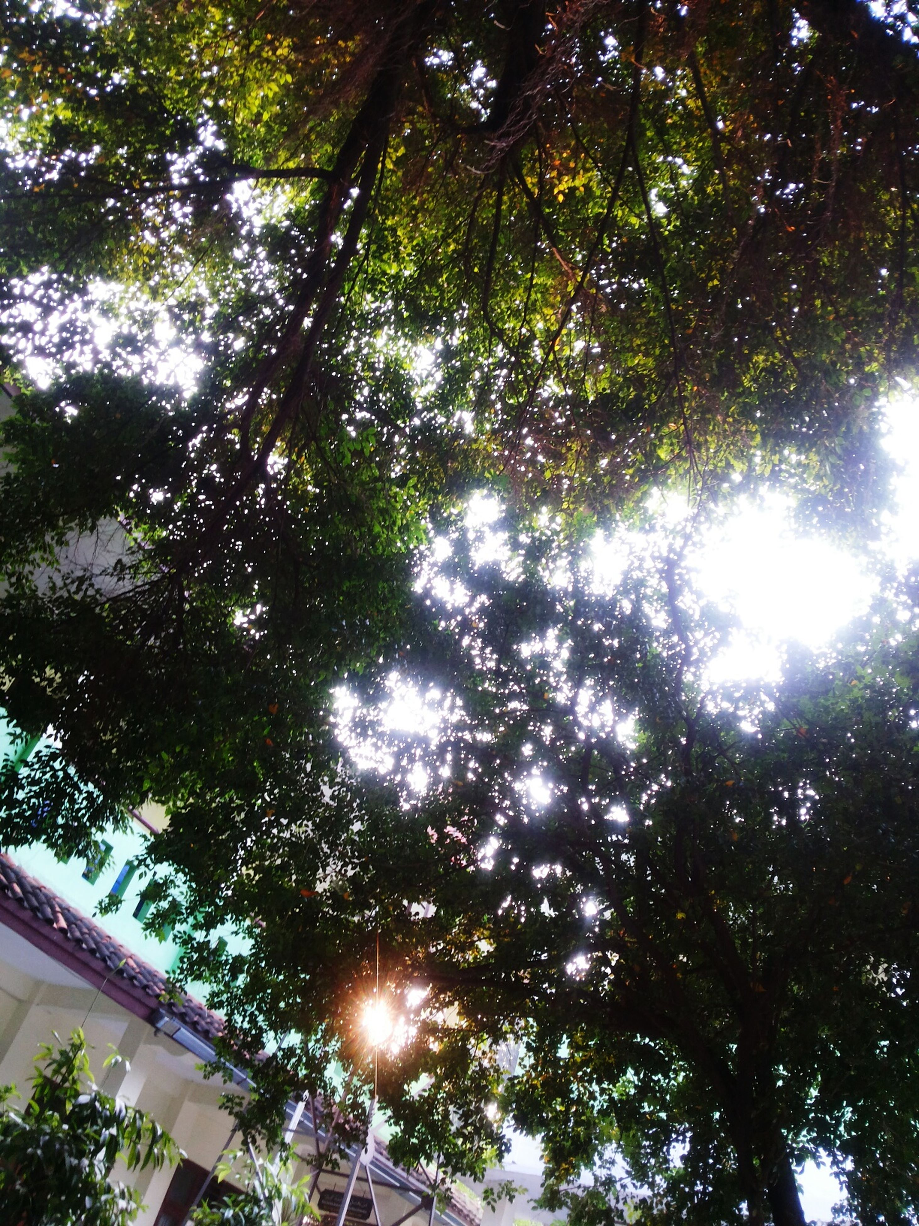 low angle view, tree, growth, branch, sunlight, nature, sunbeam, full frame, directly below, backgrounds, tranquility, lens flare, sun, beauty in nature, day, sky, no people, outdoors, tree trunk, leaf
