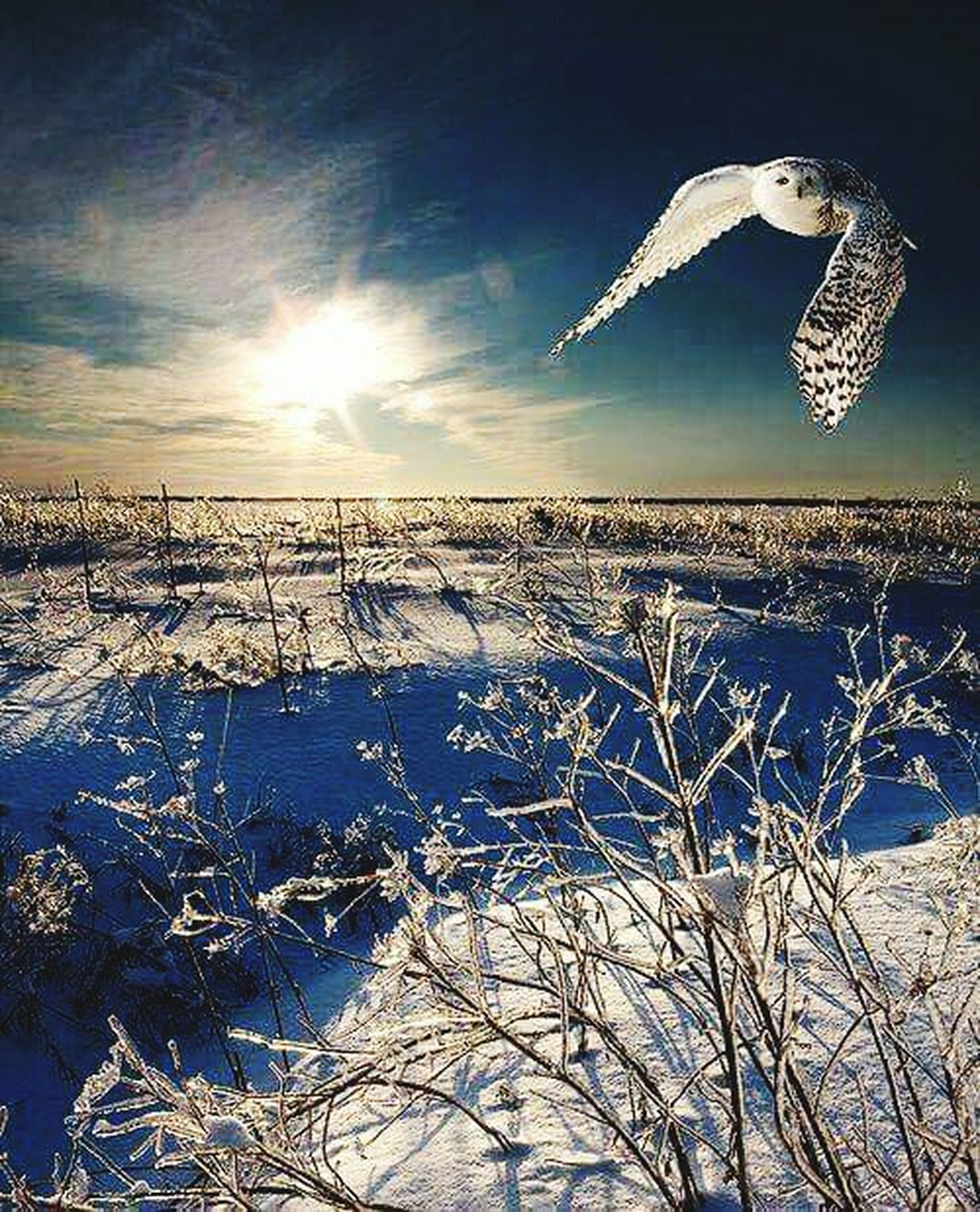 flying, sky, bird, snow, animal themes, nature, cold temperature, mid-air, beauty in nature, winter, tranquility, tranquil scene, blue, sunlight, scenics, seagull, water, animals in the wild, wildlife, sun