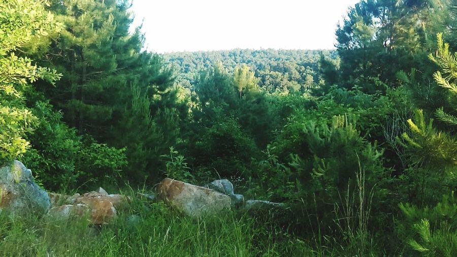 Check This Out The Essence Of Summer Fresh On Eyeem  Nauture , Tree, Nature . Mufreesboro,Ar Showcase June