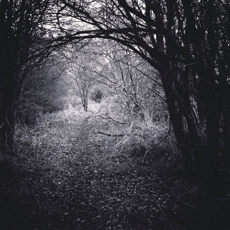 Ahhh country walks Black And White Countryside Helmdon Countrywalks Silhouette Tree Nature Tranquility Tranquil Scene Forest Outdoors Day Growth No People Beauty In Nature Branch Scenics Bare Tree Landscape Grass Truelove
