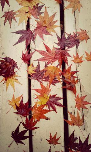 Goodbye Fall!!