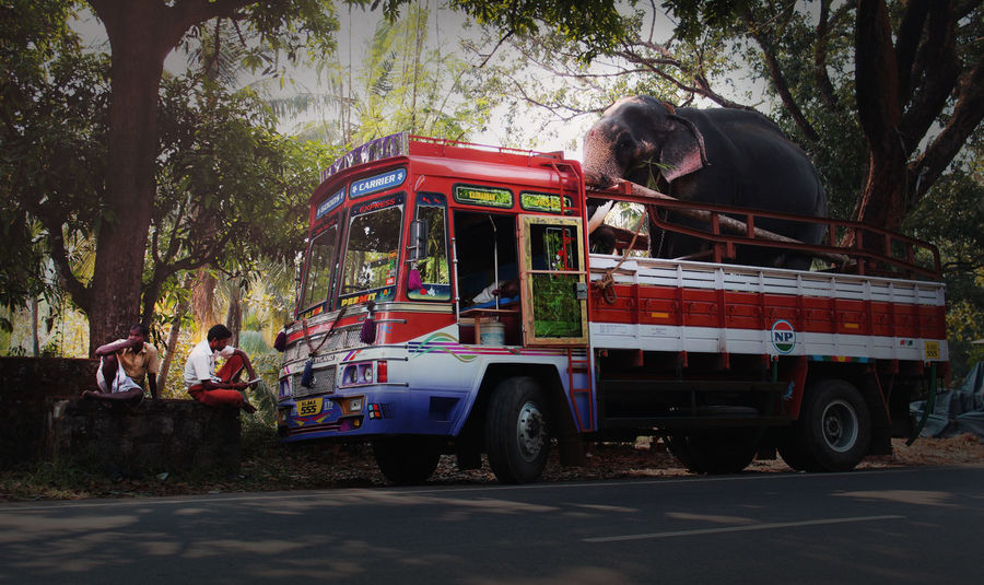 Elephant Lorry Transportation Kerala India Outdoors Rural Scene