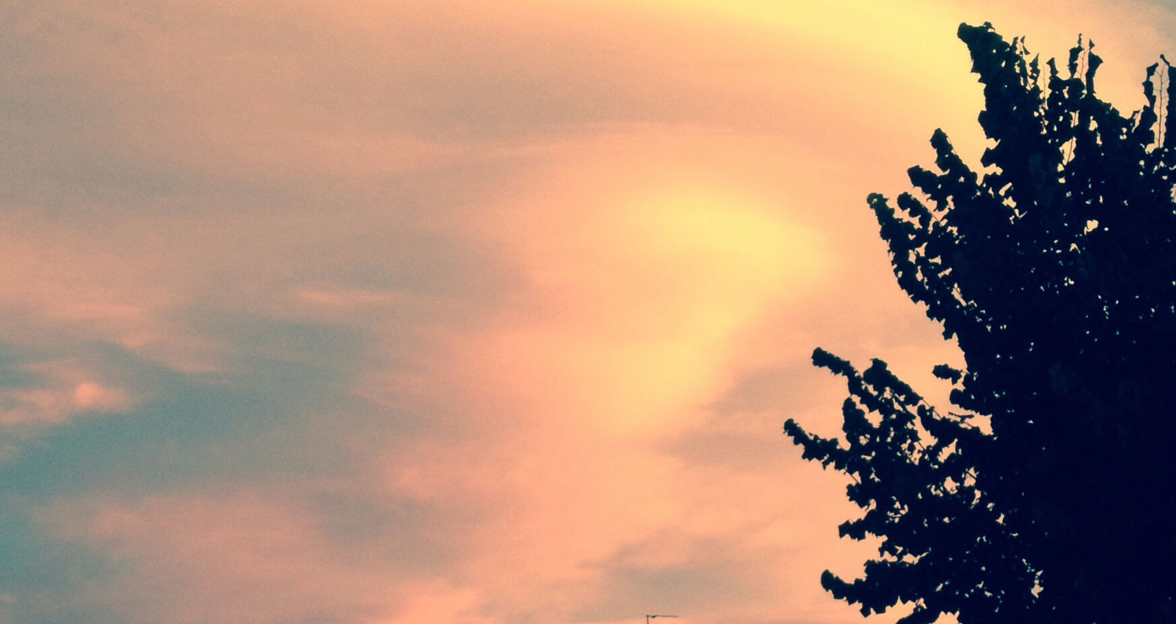 low angle view, sky, sunset, silhouette, beauty in nature, tree, tranquility, scenics, cloud - sky, nature, tranquil scene, orange color, idyllic, cloudy, outdoors, cloud, high section, branch, growth, no people