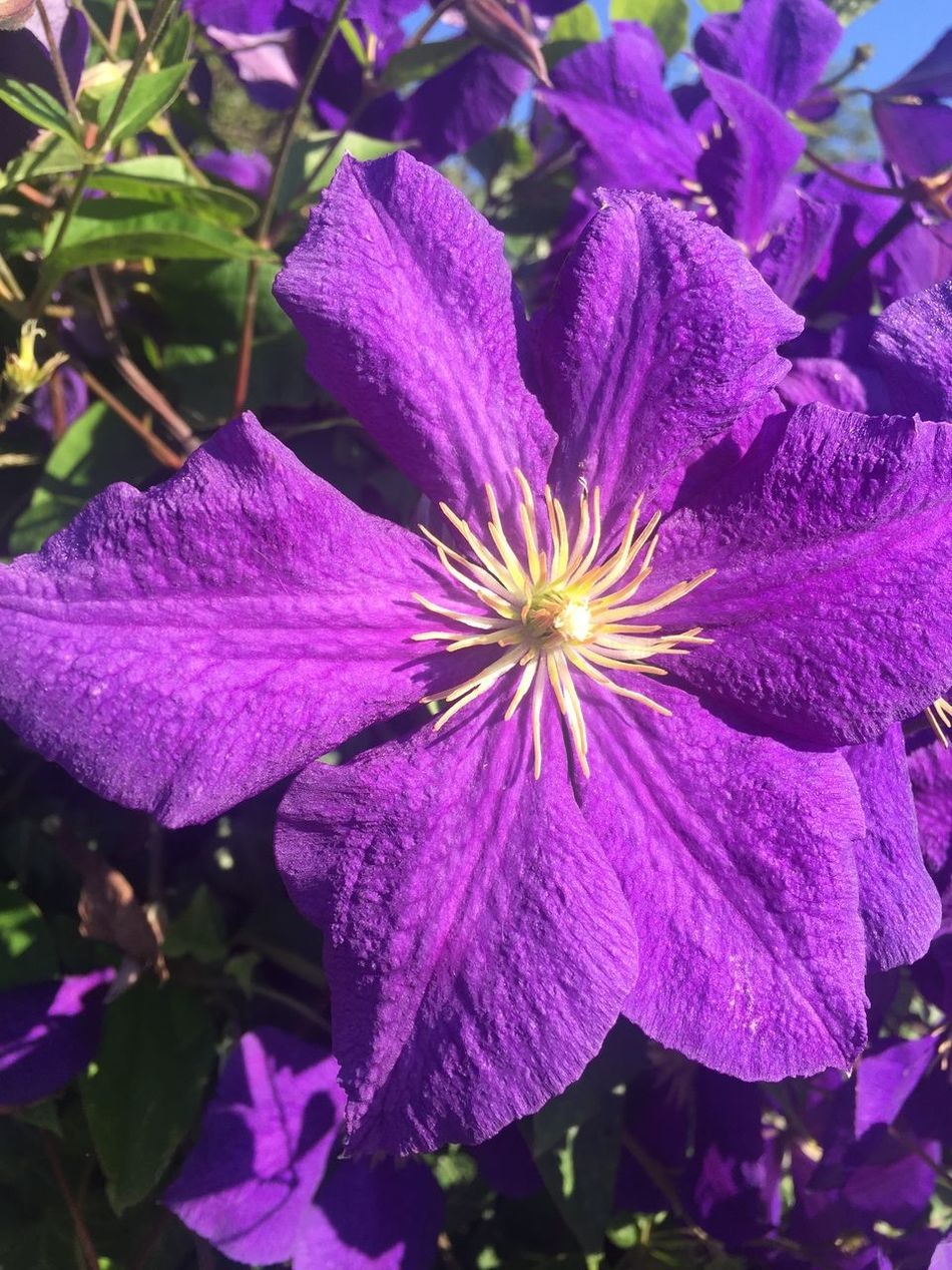 Beauty In Nature Blooming Blossom Blume Blüte Flower Flower Head Freshness Lila Nature No People Outdoors Pflanzen Plant Purple