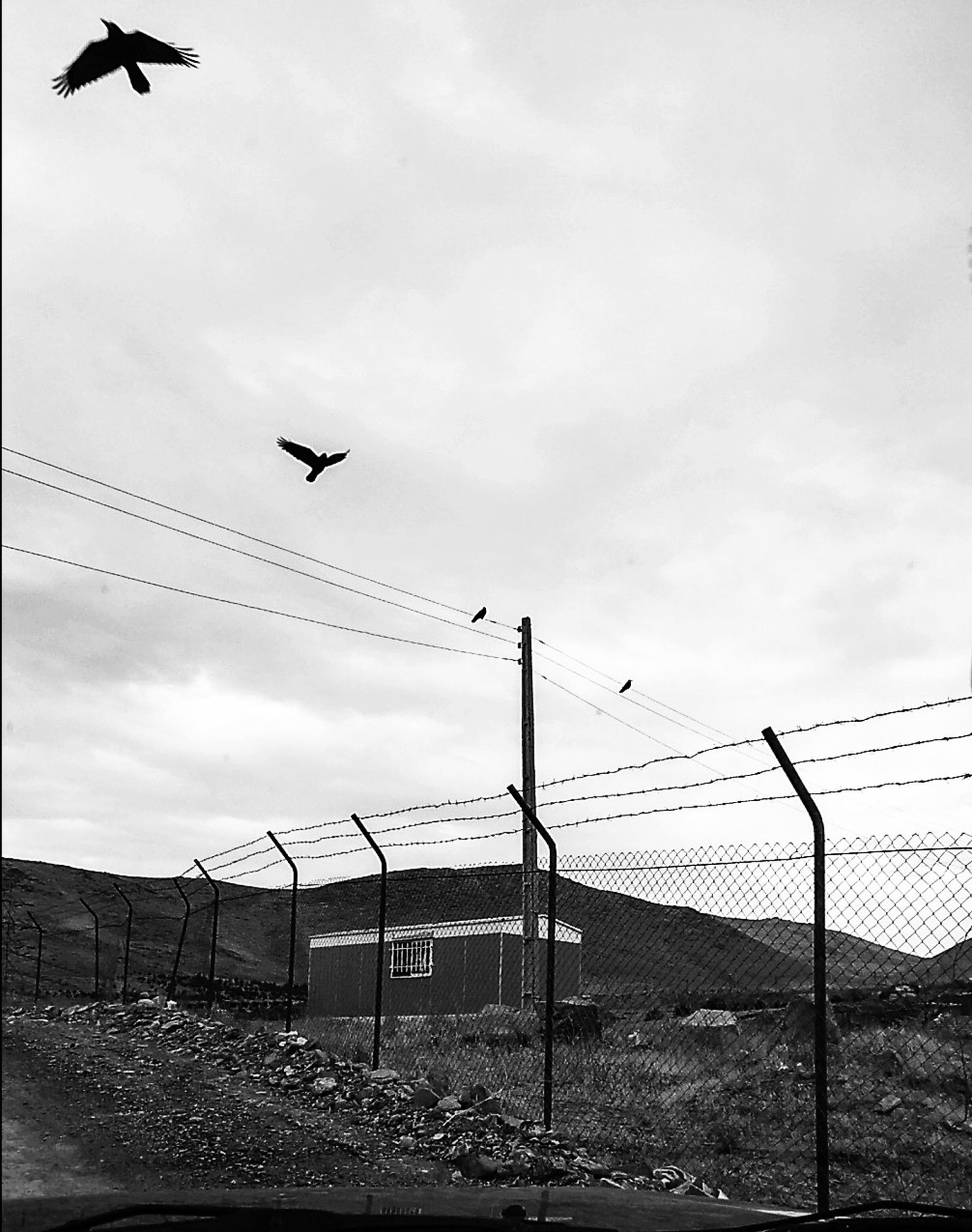 bird, flying, sky, animal themes, cloud - sky, animals in the wild, cable, outdoors, no people, day, animal wildlife, nature, built structure, building exterior, spread wings
