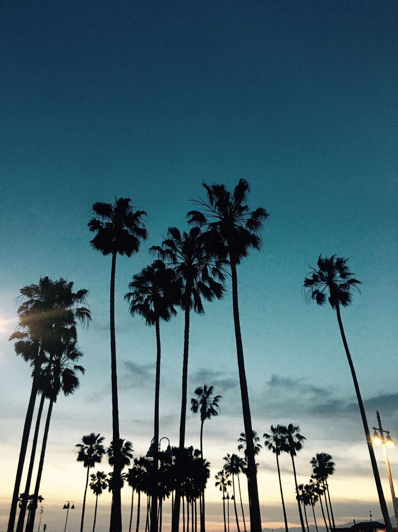 Beauty In Nature Blue California Clear Sky Day Growth Low Angle View Nature Night Night Sky No People Outdoors Palm Tree Palm Trees Scenics Silhouette Sky Sunset Tall Tree Tree Trunk Venice Beach Venice Beach Skatepark