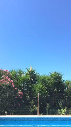 Swimming Pool Pool Blue Blue Sky Clear Sky Flowers Pink Hockney