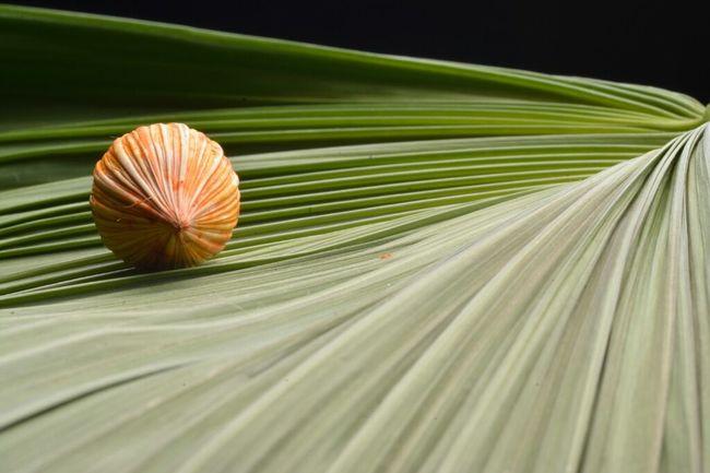 Líneas y curvas vírgenes!!! @shivaluisa TheMinimals (less Edit Juxt Photography) Eye4photography  Nature_collection Macro_collection